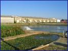 永續水產養殖水與廢水管裡的生態技術