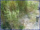 自然淨水技術之生態材料